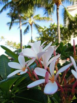 ハワイ写真1 026.jpg