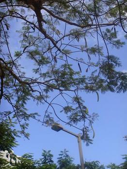 2010年10月 沖縄ステイ 020.jpg